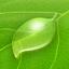 Diet Coda app icon