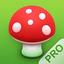 Pilze 123 app icon