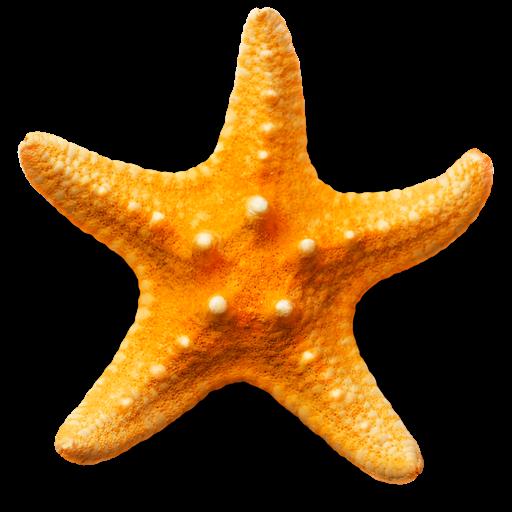 Sandy Beach 3D app icon